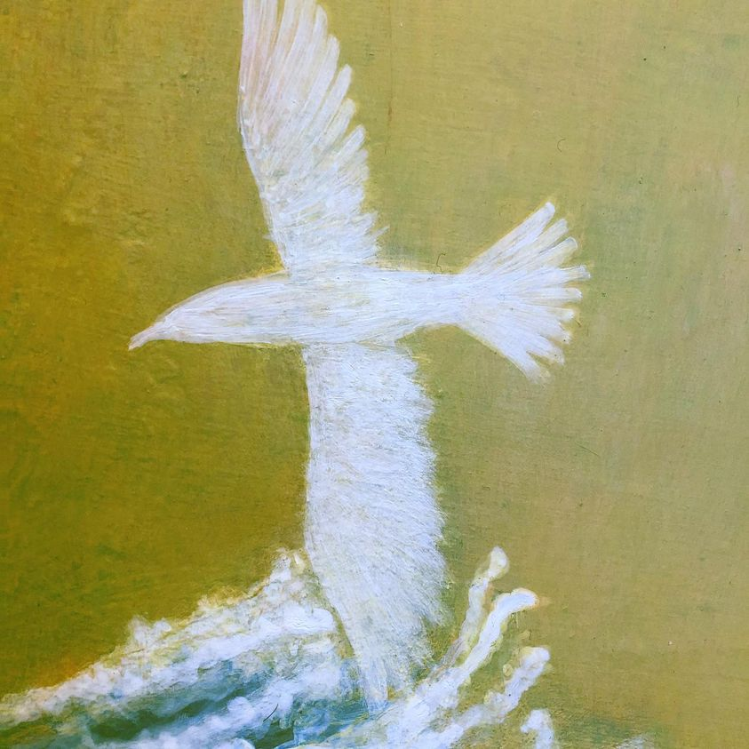 Sabian Symbols: White dove over troubled waters