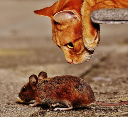 A CAT ARGUING WITH A MOUSE.