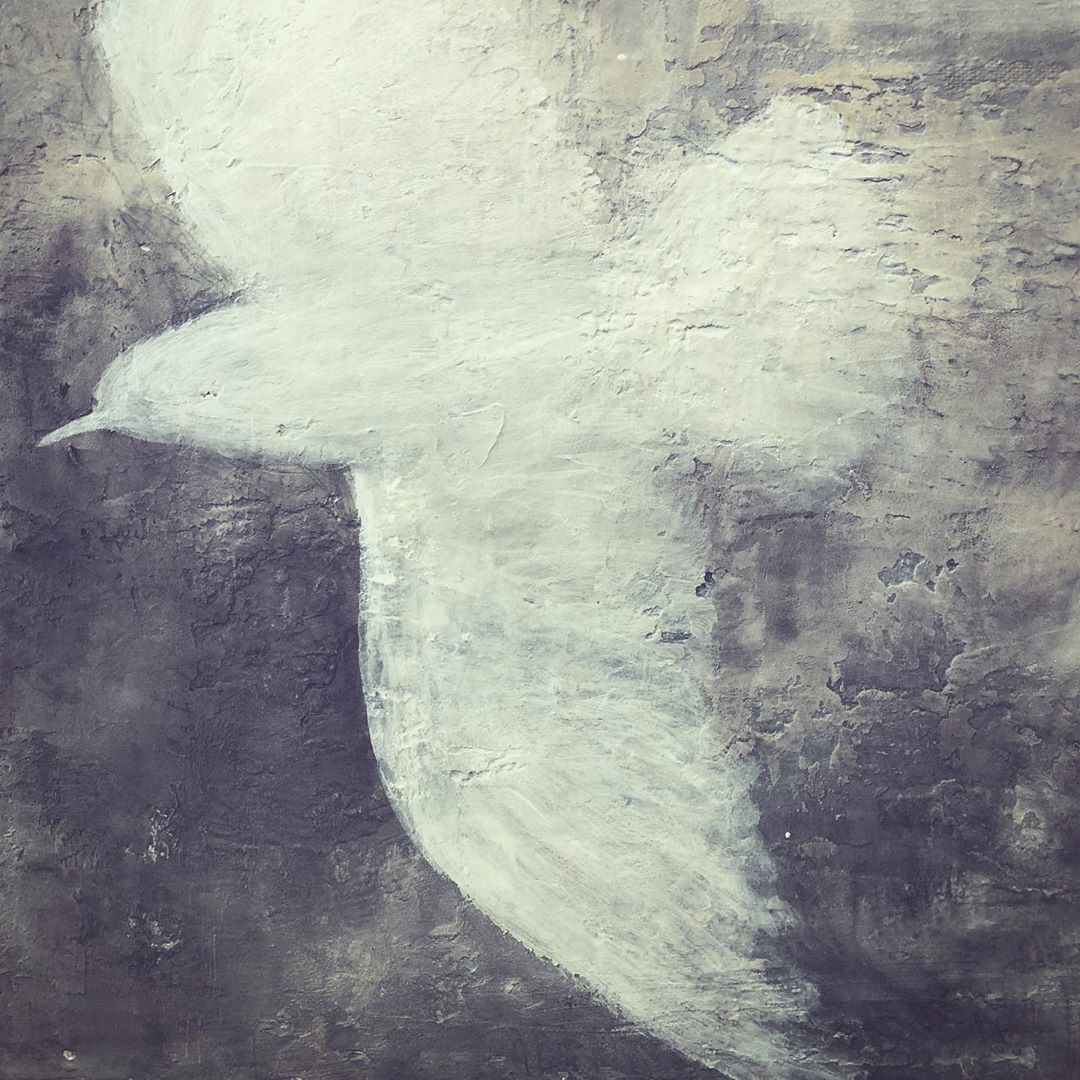 white dove flying over troubled waters