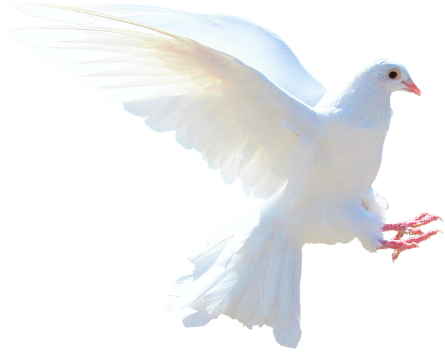 White dove over troubled waters
